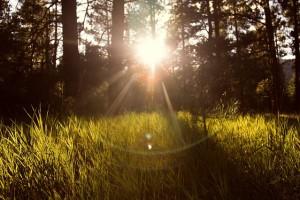 瞑想をやってみた。初心者だけど、おもしろすぎて虜になりました。