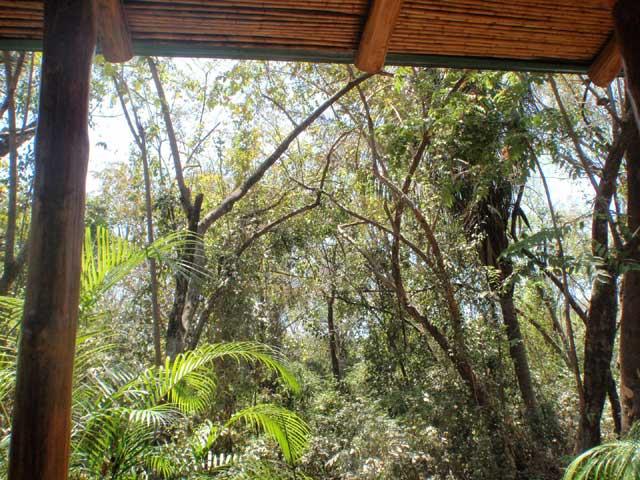 そこはジャングルの中のコテージでした。