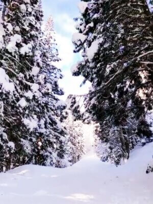 雪が林。とても心地がいいんです。